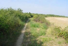 Fourrés calcicoles et plateau agricole
